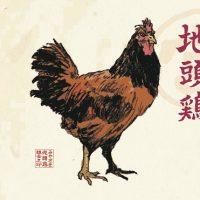 みやざき地頭鶏2 jpg